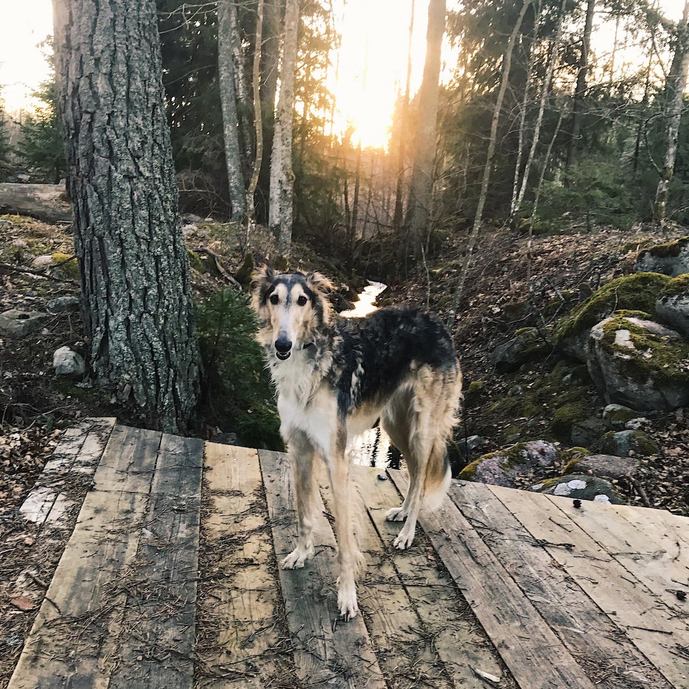 Promenera i skogen - Bra för hälsan
